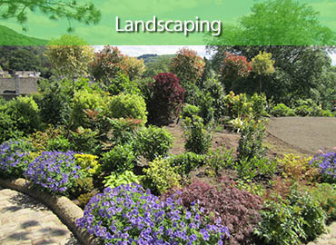 Derwent Treescapes - Landscaping