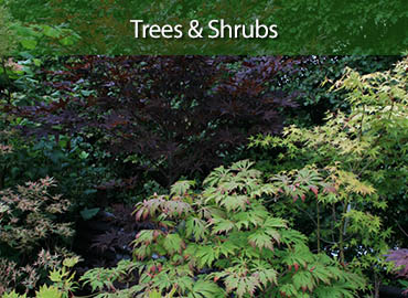 Derwent Treescapes - Trees and Shrubs